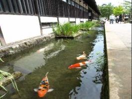 Honshū, Tsuwano (bourg)