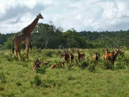 Shimba Hills (réserve nationale)