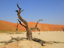 Namib Naukluft (parc)