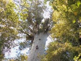 Waipoua (forêt)
