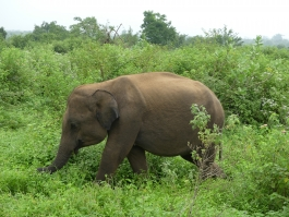 Udawalawe (parc national)