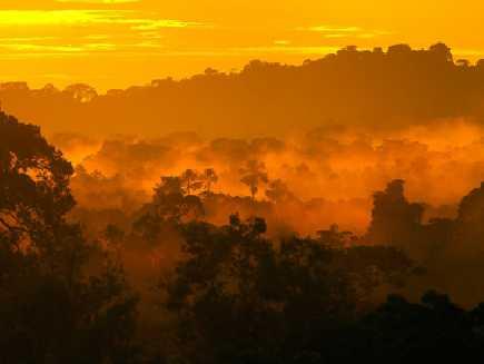 Oriente (Amazonie)