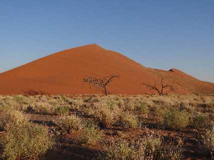 Namib (désert)
