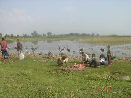 Langano (Lac)