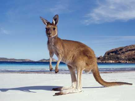 Kangaroo Island  (Australie-Méridionale)