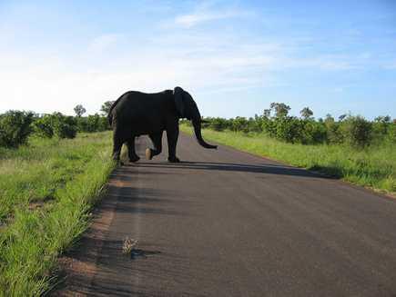 Kruger (Parc  National)