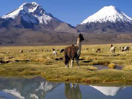 Lauca (Parc National)