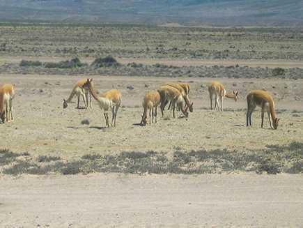 Pampa Canahuas (réserve)