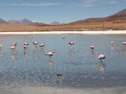 Route des Joyaux (Bolivie)