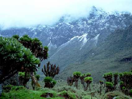 Monts Rwenzori (Parc National)