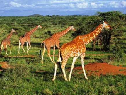 Samburu (réserve nationale)