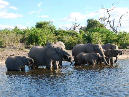 Chobe (Parc national)
