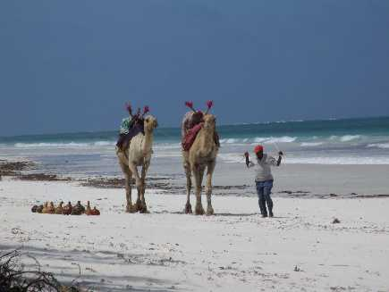 Diani (plage)